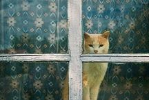 cats and windows