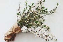 decorating with branches / by Kate Headley
