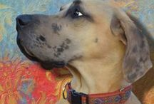 Great Dane - Art and Gifts / Art, photography and gifts for Great Dane lovers.