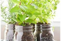 Gardens / Gardening tips, tricks and inspiration.
