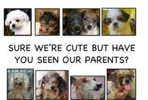 Contra el maltrato animal / Mill Dog Rescue, abandono de animales---