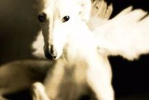 Greyhound - Art and Gifts / Art, photography and gifts for Greyhound, Italian Greyhound, Whippet, Pharaoh Hound and Ibizan Hound Lovers.