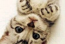 Kitty Kat!