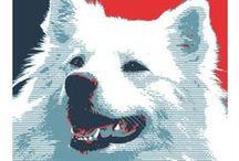 American Eskimo Dog and Samoyed - Art and Gifts / Art, photography and gifts for American Eskimo dog and Samoyed lovers.