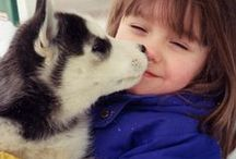 Siberian Husky - Art and Gifts / Art, photography and gifts for lovers of the northern breeds - Siberian Husky and Alaskan Malamute.