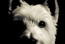 Westies - Art and Gifts