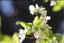 Leaf & Petal / Leaf&Petal is my flower photoblog. Visit http://leafandpetal.oriandras.hu