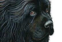 Newfoundland - Art and Gifts / Art, photography and gifts for Newfoundland and Great Pyrenees lovers.