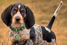 Bluetick Coonhound - Art and Gifts