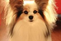 Papillon - Art and Gifts