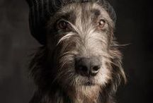 Wolfhound - Art and Gifts