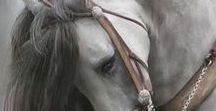 Painting - Horses / Painting - Horses