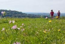 """Camping L'Etang de la Fougeraie, Nièvre Bourgogne / En #Bourgogne, dans la #Nièvre au coeur du Parc naturel Régional du #Morvan, nos emplacements, chalets et tentes équipées vous attendent. Dans un cadre verdoyant de plus de 9 hectares, tout est pensé pour votre confort, votre #repos et votre bien-être, en accord avec la #nature. Notre camping est labellisé """"Camping Qualité""""."""