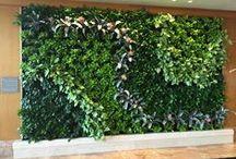 Interior Plant & Floral Designs
