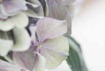 Blooms & Florals