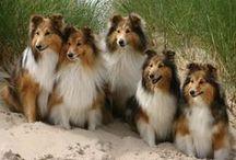 Dogs Rule II / by Gloria Spiritas
