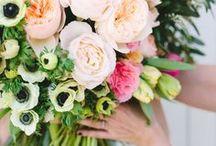 Blooms / blooms / flowers / gardening / flower arrangement / flower arrangements / bouquet / flower bouquet / flower / peonies / peony / peony arrangement / peony bouquet / hydrangea / hydrangea bouquet