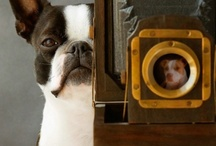 Everything  Canine / by Carolyn Machado