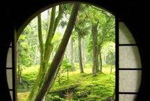 ........into the garden / by Carolyn Machado