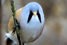 Birds on the Wing / Birds of many and varied feathers. ~