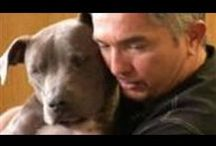 Cesar Millan, Leader Of The Pack / Cesar Millan, Leader of the Pack, can be found at CesarsWay.com and also on National Geographic Wild. The Affiliate Program for Cesarsway com is available at Commission Junction. Earn $$$ with advertising on your site or blog! / by Snow Consulting