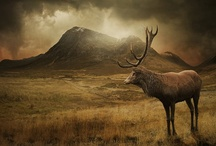 Scotland / by Mary Platt