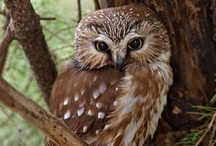 Uhu..owls