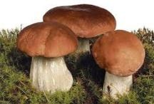 Mushroom magic  / Fungus- of all sorts- love it!