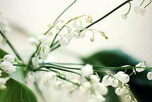 lily of the valley / by Pirjo Kovanen