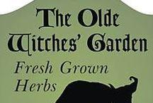 Garden:Plants*Herbs*Tips / by Sandra Lederer