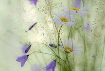 wildflowers / by Pirjo Kovanen
