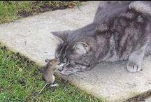 Mačky / Informácie o mačkách , humorné videa, fotky.