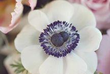 Flower Shop / by Elana Arsondi