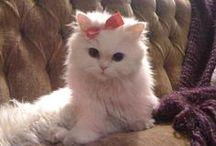 Crazy Cat Lady! / Title says it all! / by Tara Batema