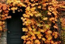 """Autumn Air / """"Delicious autumn! My very soul is wedded to it, and if I were a bird I would fly about the earth seeking the successive autumns."""" George Eliot"""