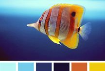 Color / by Aubrey Miller