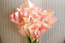 Wedding Flowers - Wedding Bouquet / If you want to add pins to this board just comment on a pin that you want to join. Please pin only 3-4 items in a row and do not post the same pin twice at one time! Happy pinning!