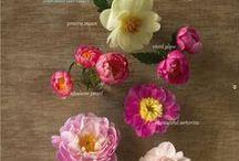 {Floral Design} Catalogue