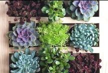 Creative Vertical Garden Ideas / Gardening is food for the soul and planet. www.mooibos.co.za. Check out our favourite, beautiful, easy and creative, gardening ideas for small spaces. #verticalgarden #savetheplanet #easygardening #smallspaces #succulents #homedecor