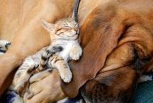 Animals / by Meghan Murphy