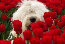 DOGS / by Laurie Kuchera