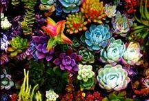 Cacti & Succulents / what I CAN grow! :-) / by Lisa Bienko