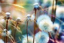 Soft Focus Beauties / by Ilene Price