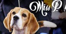 Beagles! / Beagles!
