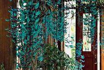 Orquidário / Jardim