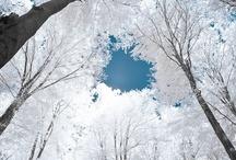 Frosty and Beautiful / Breathtakingly Beautiful Wintry Sights