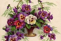 Vintage Treasures - Flowers / in Postcards, Seed Packets and Prints. Loving the work of Catherine Klein.