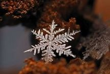 Let it Snow... flakes. / Mother Nature is the Greatest Crafter. Real life snowflakes.