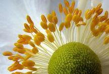 So close, so beautiful / Floral close-ups.