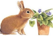 Bunnies / Always a Favorite